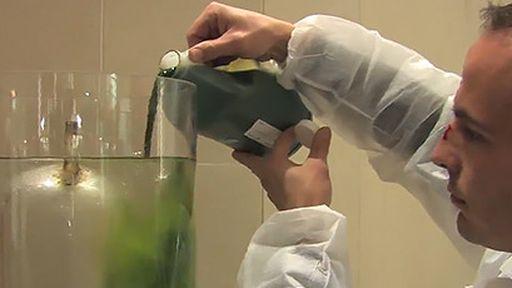 Lâmpada de algas é capaz de absorver 200 vezes mais CO2 que árvores