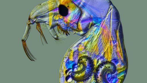 As 10 fotos microscópicas mais incríveis de 2020