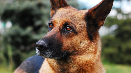 Farejadores de coronavírus: cães detectam COVID-19 em aeroporto na Finlândia