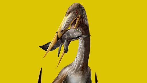 Pterossauro de pescoço longo tinha estrutura óssea impressionante, diz estudo