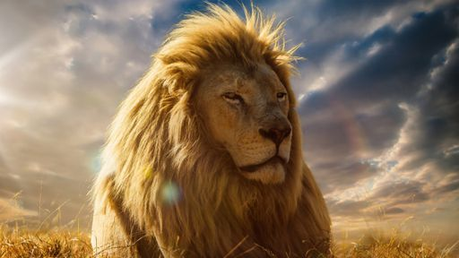 """Site adulto que vazou filme """"O Rei Leão"""" tira conteúdo do ar [Atualização]"""