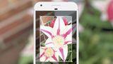 Alguns usuários já estão conseguindo acessar o Google Lens com o Assistant
