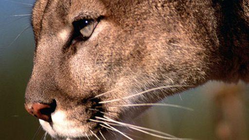 Apple lança primeira atualização do Mountain Lion