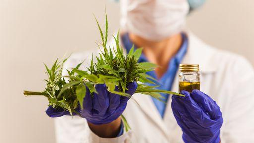 Estresse na pandemia | Pesquisa investigará os efeitos da cannabis em médicos