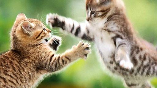 Vídeos de gatos saem da internet e ganham seu próprio festival