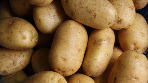 Cientistas inserem gene humano em batatas e o resultado é surpreendente