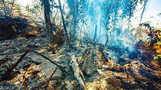 Amazônia segue ameaçada com queimadas associadas ao desmatamento