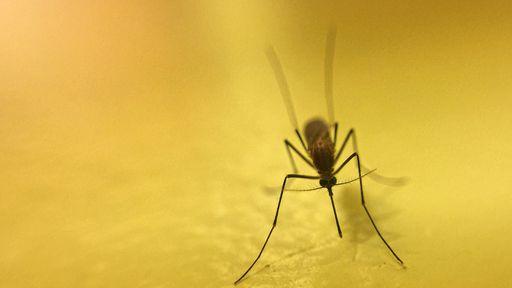 Pesquisadores criam tecido-repelente que evita picadas de mosquitos em 100%
