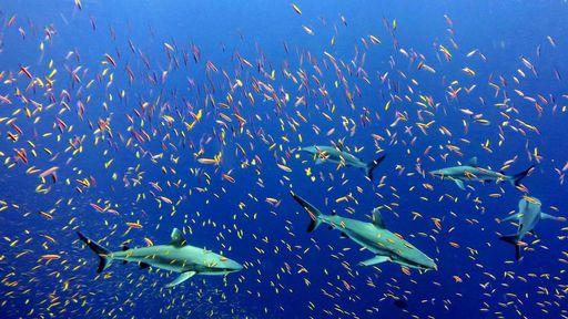O que já conhecemos do fundo do mar?