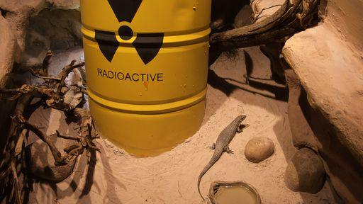 O que é radioatividade e para que ela serve?