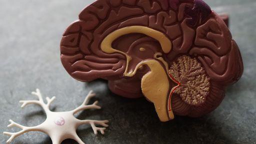 COVID-19 afeta cérebro e células nervosas, segundo estudo brasileiro
